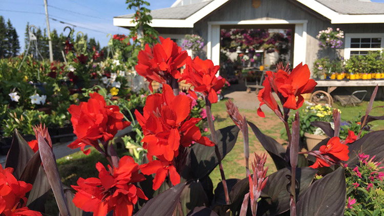 Island Pride Garden Co - located in Wood Islands, PEI and Hunter River, PEI